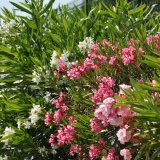 Blumen in der Marina Kastela